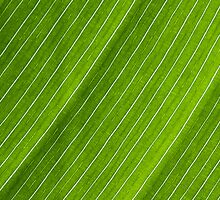 Green Striped Leaf by Dan Lauf