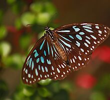 Beautiful Blue Butterfly by Sea-Change