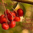 Berries &#x27;n&#x27; bokeh - Christmas card by Celeste Mookherjee