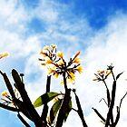 tropical dreams by startori