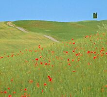 Image of Tuscan countryside by Haggiswonderdog