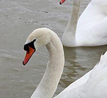 Swans in the lake by fotorobs