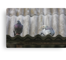 Pigeons on the roof. Canvas Print