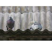 Pigeons on the roof. Photographic Print