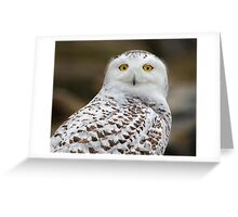 Snowy portrait  Greeting Card