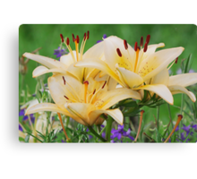 Beige lilly Canvas Print