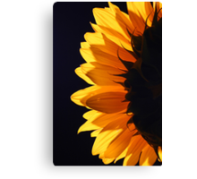 Sunflower in studio 4 Canvas Print