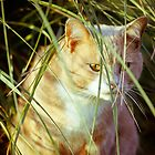 Cat 3 by Liev