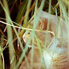 Cat 6 by Liev