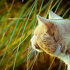 Cat 7 by Liev