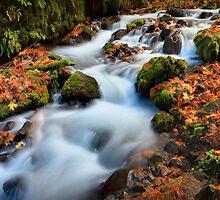 Autumn on Wahkeena Creek II by Tula Top