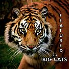 Featured in Big Cats by a~m .
