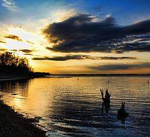 Evening Shades by Carolyn  Fletcher