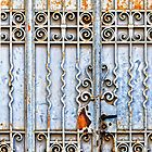 Rusty gate - iPhone case by Silvia Ganora