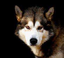 WolfHeart by Liero
