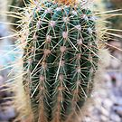botanic garden cactus by andytechie