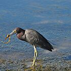Blue Heron with Lunch by joevoz