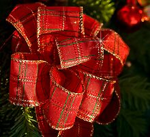 Holiday ribbon by Celeste Mookherjee