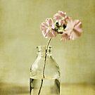 Fleurs roses by Anne Staub