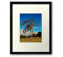 Gum Tree Framed Print