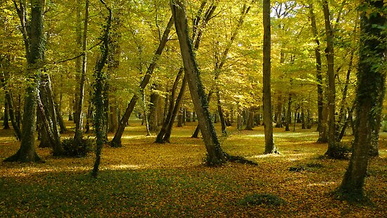 Autumn in the forest of Chenonceau by Peter Zentjens