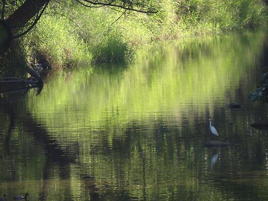 Riverscape with birds - Lado del rio con aves by Bernhard Matejka
