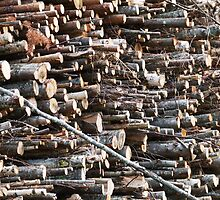 Wood, Stacked by tenzil