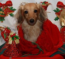 Dog in Christmas Sack by Sally Robinson