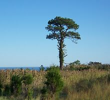 Tree By The Bay by James Brotherton