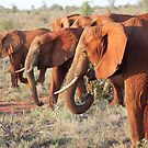 Red Elephants of Tsavo by BlackhawkRogue
