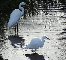 Great-Common-Egret and Snowy Egret - Garzon blanco y Garza Dedos Dorados by Bernhard Matejka