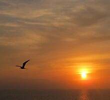 Frigate Bird in the Sun - Fregata en el Sol, Puerto Vallarta, Mexico by PtoVallartaMex