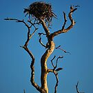 Bird Nest in Top of Tree by joevoz