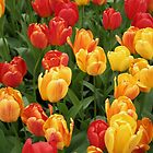 Keukenhof Tulips by Jeanne Horak-Druiff