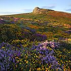Haytor In Colour - Dartmoor National Park by garykingphoto