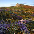 Haytor In Colour - Dartmoor National Park by garykingphoto
