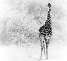 Giraffe coming out of the bushes by Teus Renes