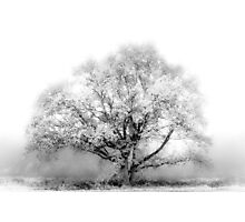 White Tree Photographic Print