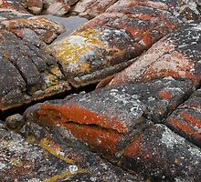 The Colours of Lichen, Binalong Bay,Tasmania, Australia. by kaysharp