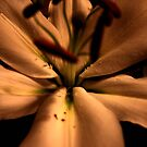 Silver Wedding Anniversary Flower by Laura Jane Robinson
