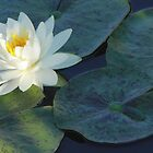 Wedding Dress Water Lily by Robert Armendariz