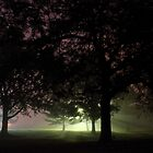 Fog Trees by wanblake