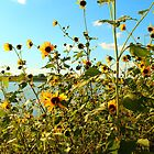 Sunflower Shore by wanblake