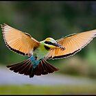 Rainbow Bee-Eater 447 by John Van-Den-Broeke