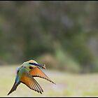 Rainbow Bee-Eater 449 by John Van-Den-Broeke
