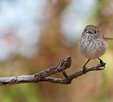 Inland Thornbill by Haggiswonderdog