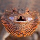 Smiley - Central Bearded Dragon by Haggiswonderdog