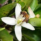 At Work on the Orange Blossom by Julie Sleeman