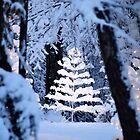 Christmas Tree by Duane Salstrand
