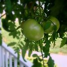 Green Tomatoes by ctheworld